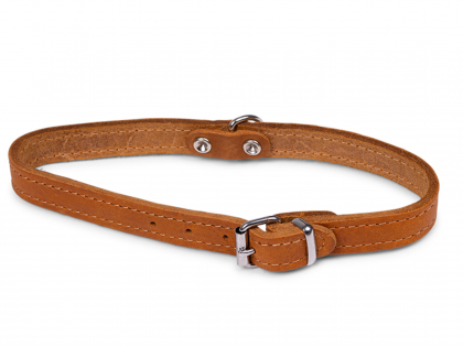Collar oiled leather cognac 42cmx16mm M