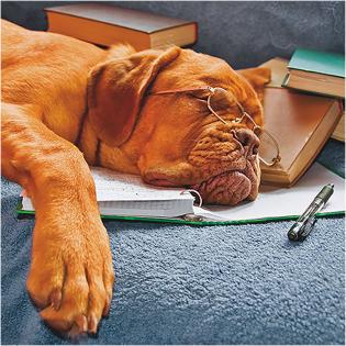 Carte voeux 3D Sleeping dog