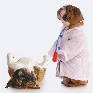 Carte voeux 3D Doctor Dog