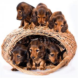 3D Wenskaart 6 dogs family
