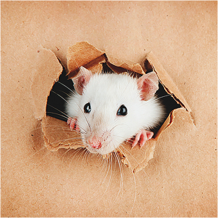3D Greeting Card Curious Mouse