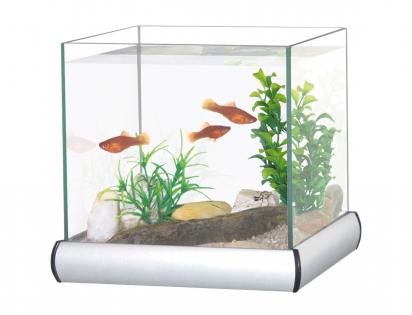 Aquarium with aluminium frame 8L