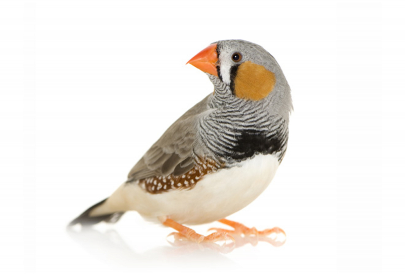 Vogels-homepage.jpeg